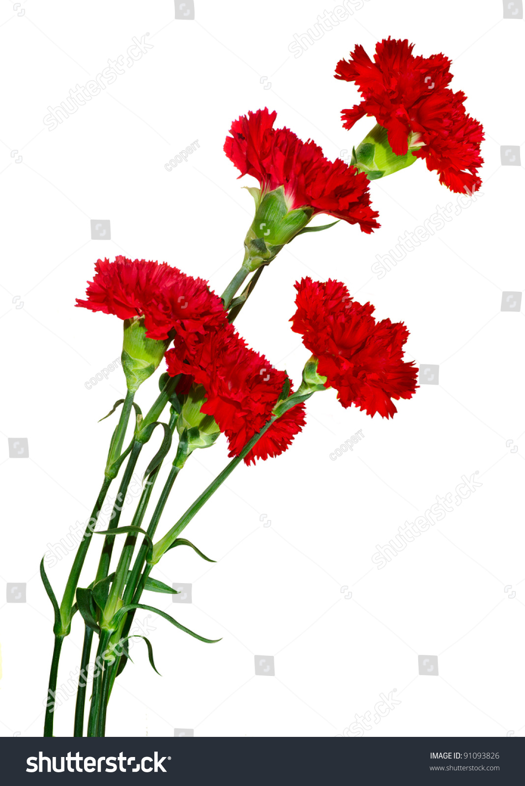 Image Five Colors Carnation On White Stock Photo (Royalty Free ...