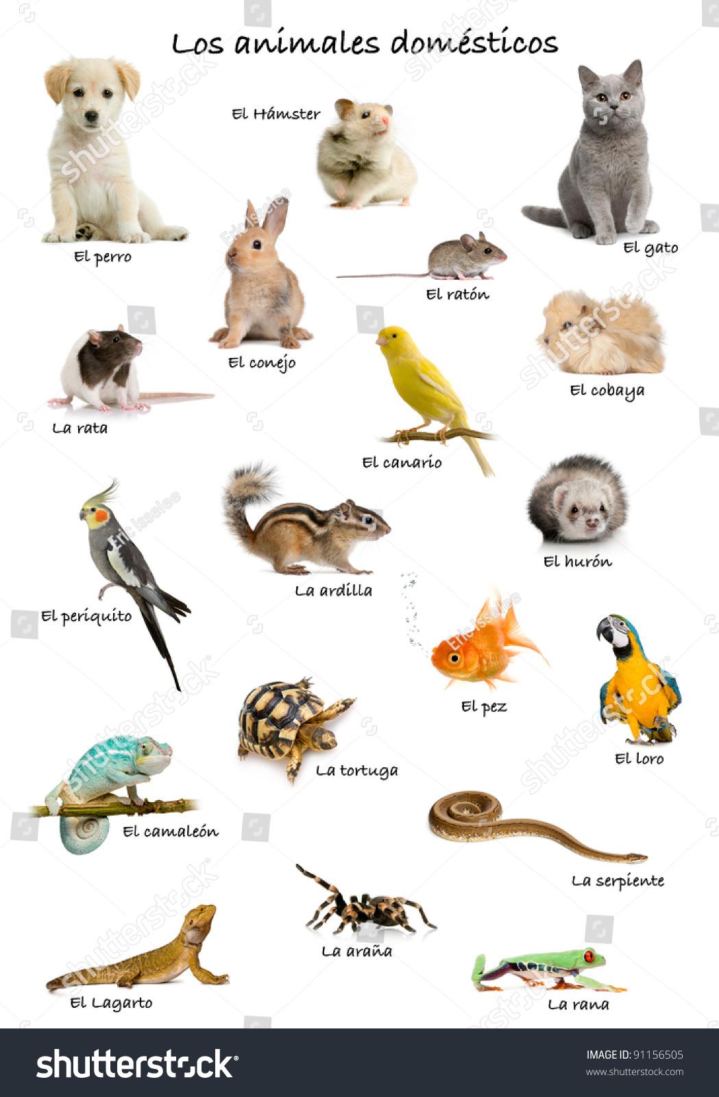 Для детей картинки животных для детей на английском языке