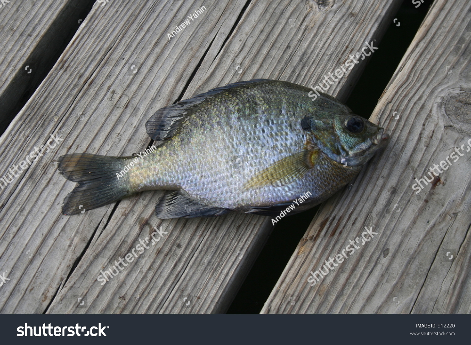 Live fish on wooden deck stock photo 912220 shutterstock for 18th floor balcony live