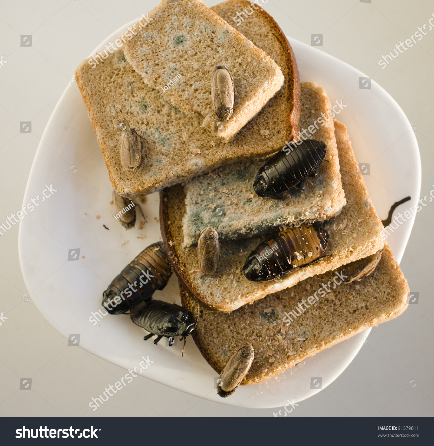Bread On Dish Infested Roaches Mold Stock Photo 91579811 ...