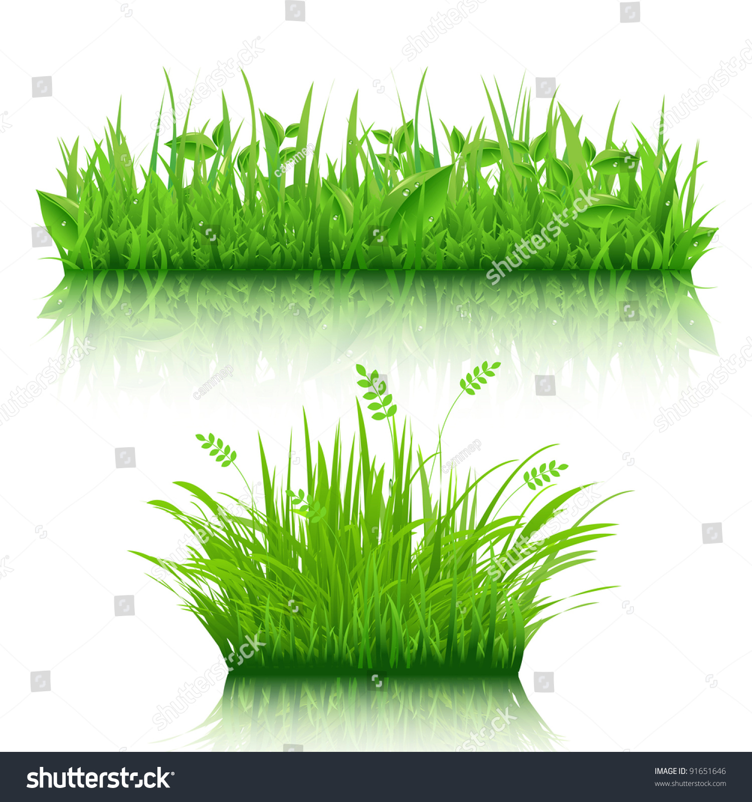 Mesmerizing grass vector pictures