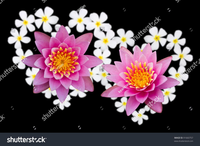 Two lotus flowers above heartshaped flowers stock photo royalty two lotus flowers above heartshaped flowers stock photo royalty free 91660757 shutterstock izmirmasajfo