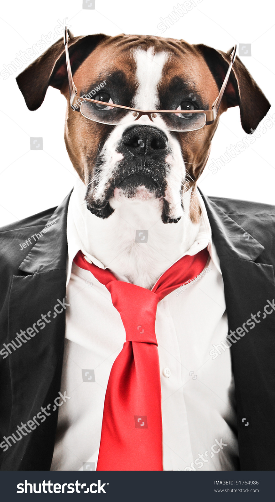 [Image: stock-photo-boxer-dog-wearing-a-suit-red...764986.jpg]