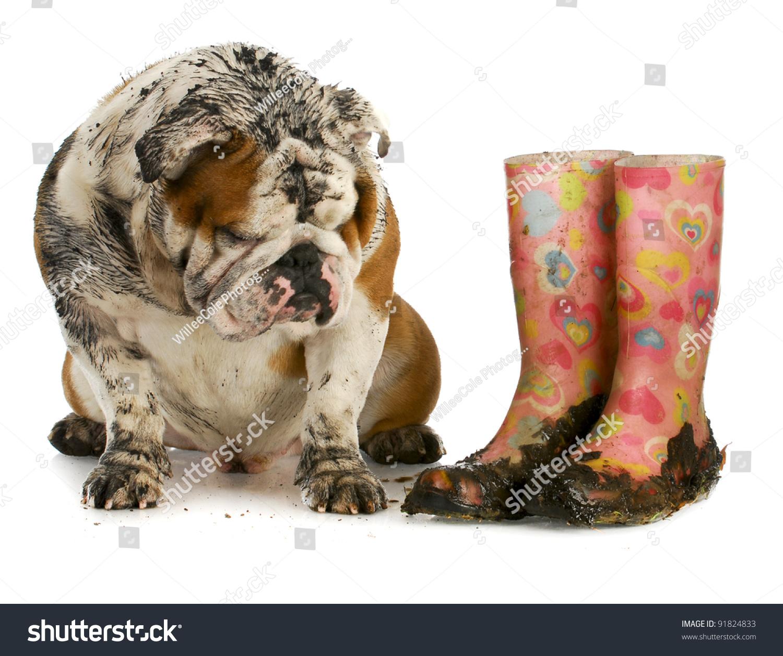 muddy dog clipart - photo #30