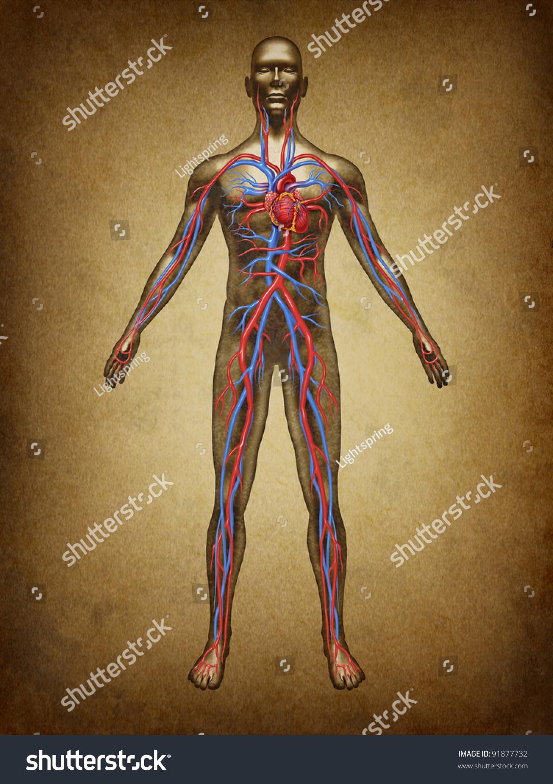 Human Blood Circulation Color Grunge Vintage Stock Illustration ...