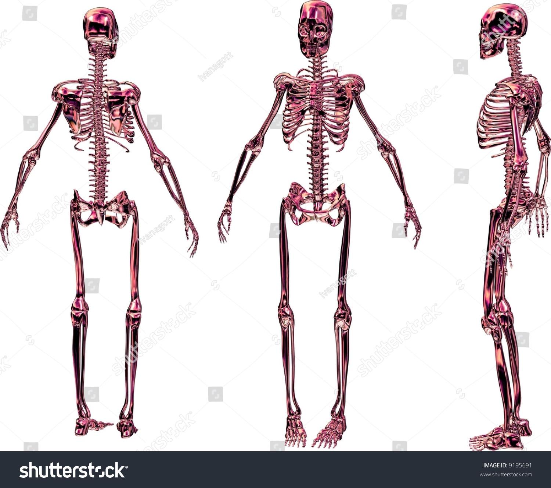 Rendering Shows Skeleton Women 3 Different Stock Illustration ...