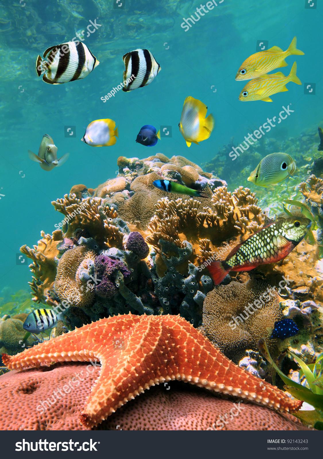 11 HOURS Stunning 4K Underwater footage + Music | Nature ... |Colorful Underwater Life