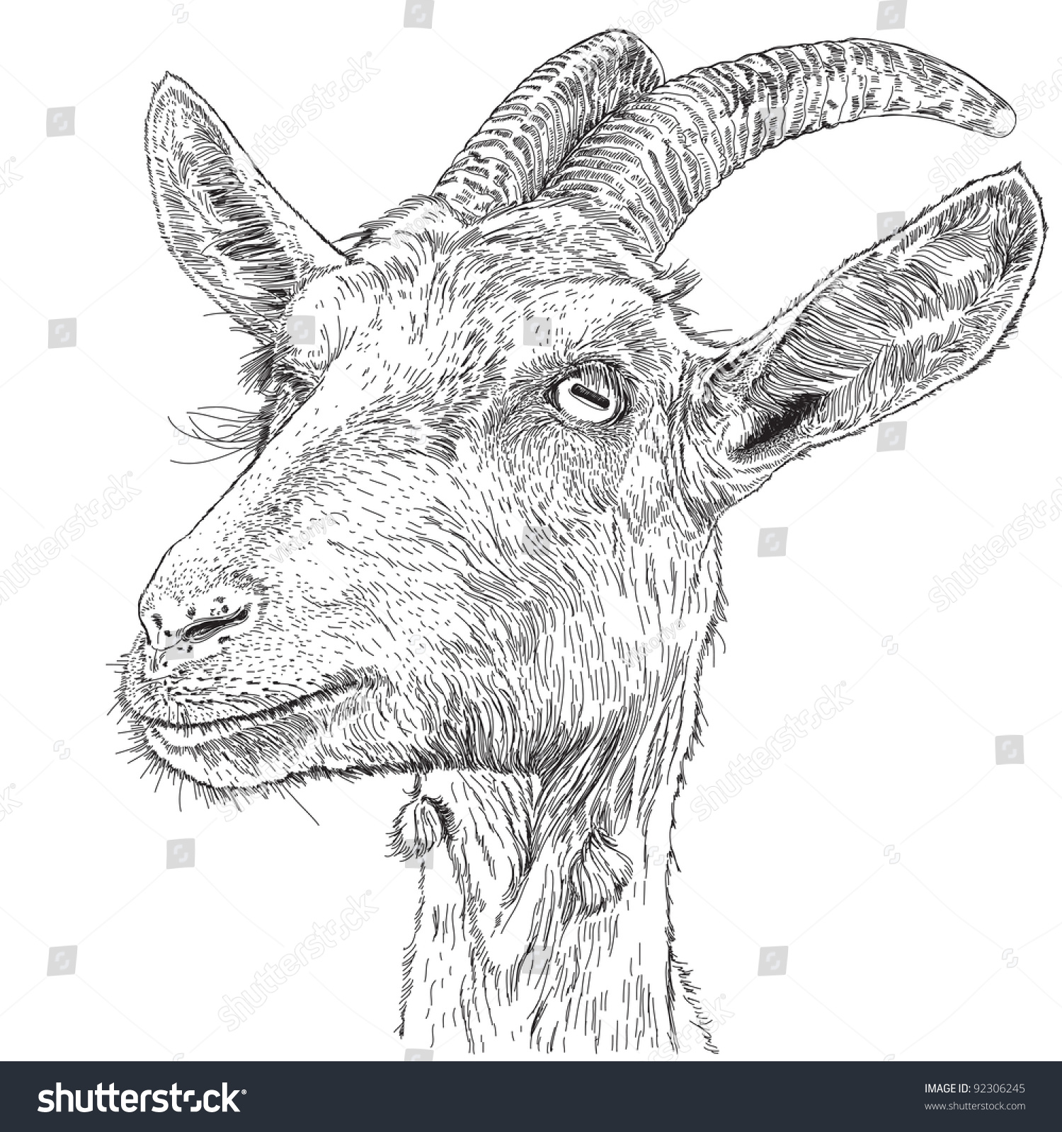 Goat Portrait Vector Drawing Stock 92306245