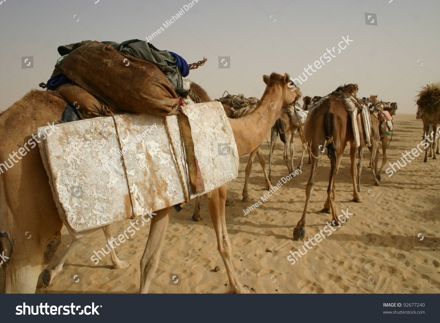 Popular 46 KB Camels Traveling In The Desert On The Ancient Road To Bethlehem