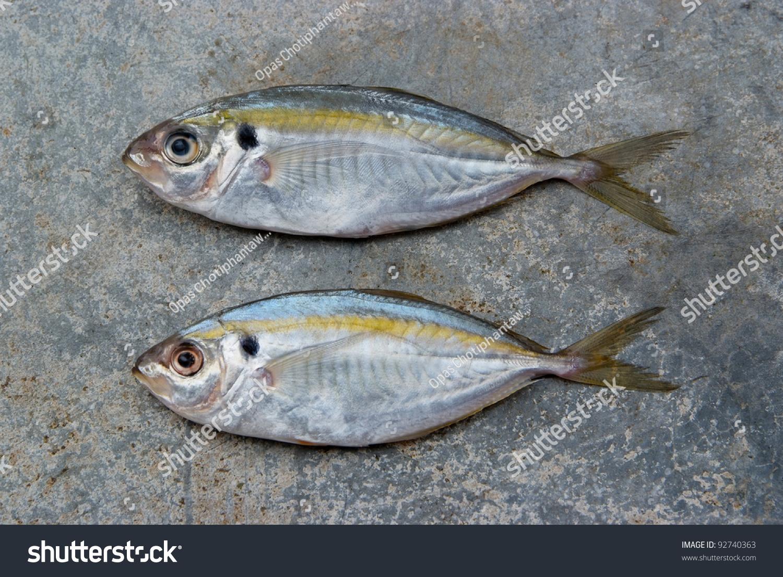 Trevally Varieties Grey Giant Hitam Xl Stock Photo The Yellow Stripe Fish On Texture Of Concrete 1500x1104
