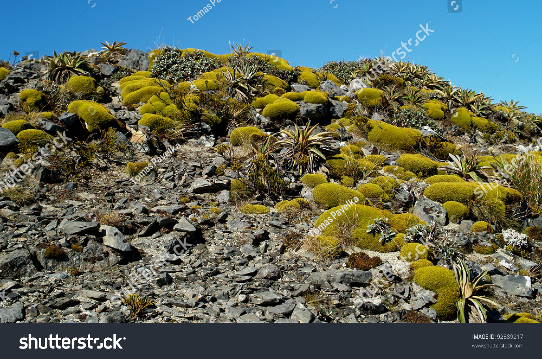 stock-photo-mountain-plants-kepler-track-new-zealand-92889217.jpg