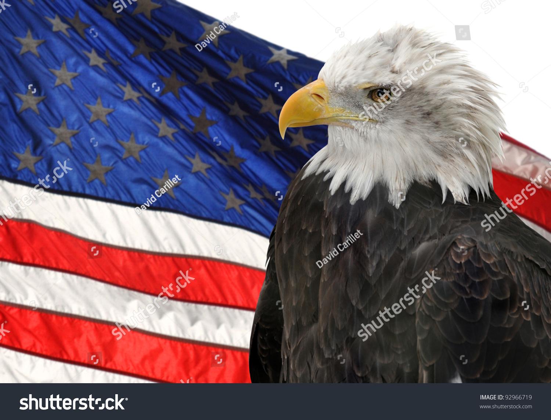 american flag bald eagle symbols freedom stock photo