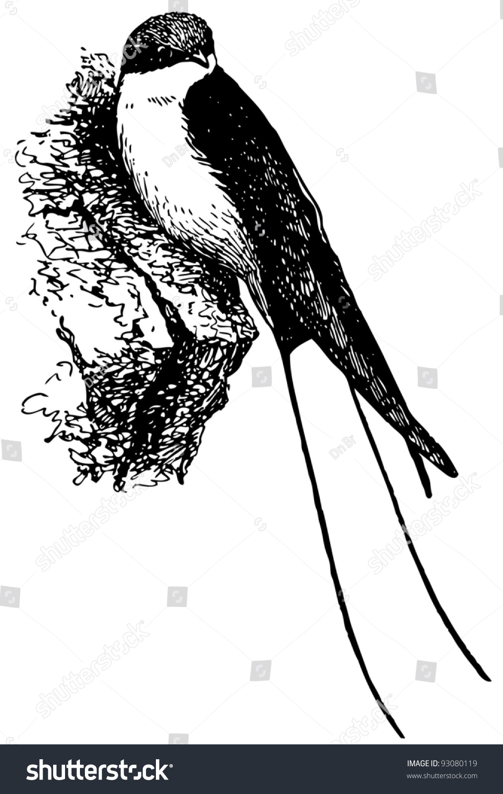 Bird Wiretailed Swallow Stock Vector 93080119 - Shutterstock