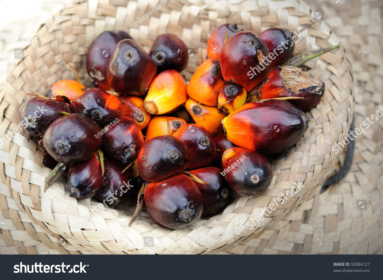 Palm Oil, A Well