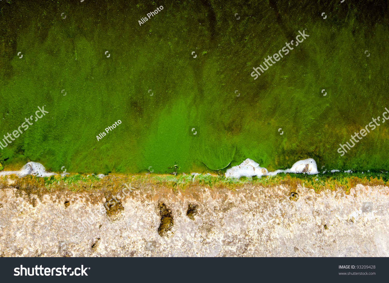 Green pond water with algae background and texture stock for Green pond water