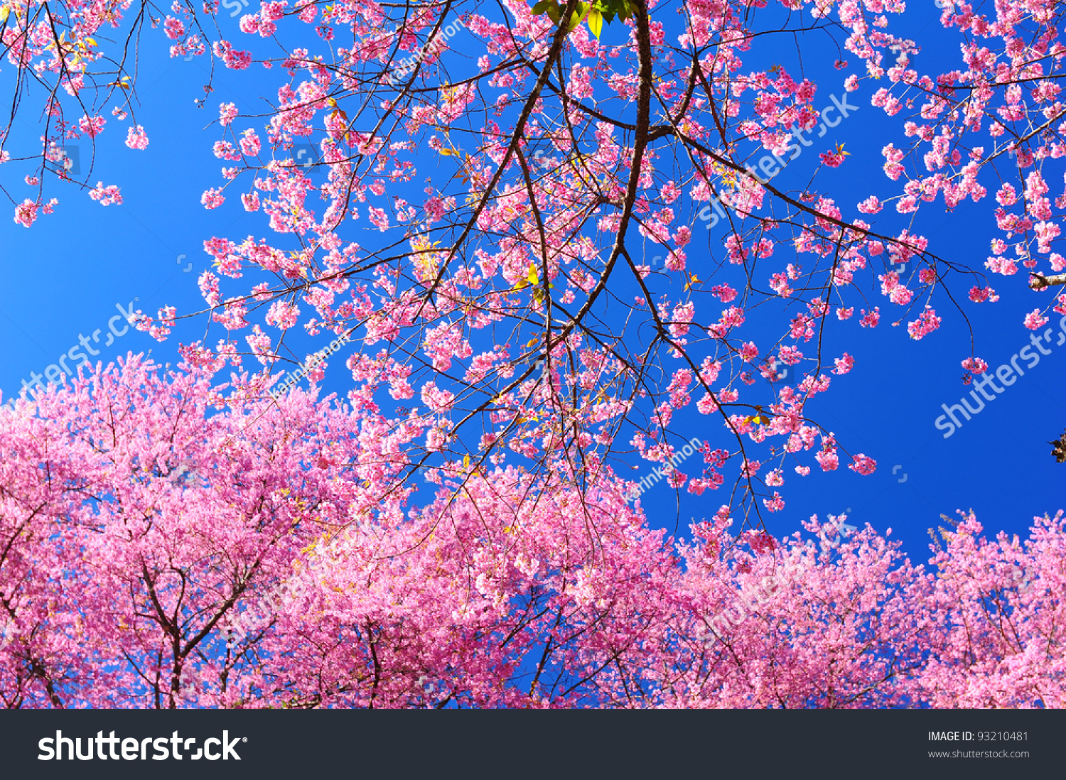 pink spring trees wallpaper - photo #48