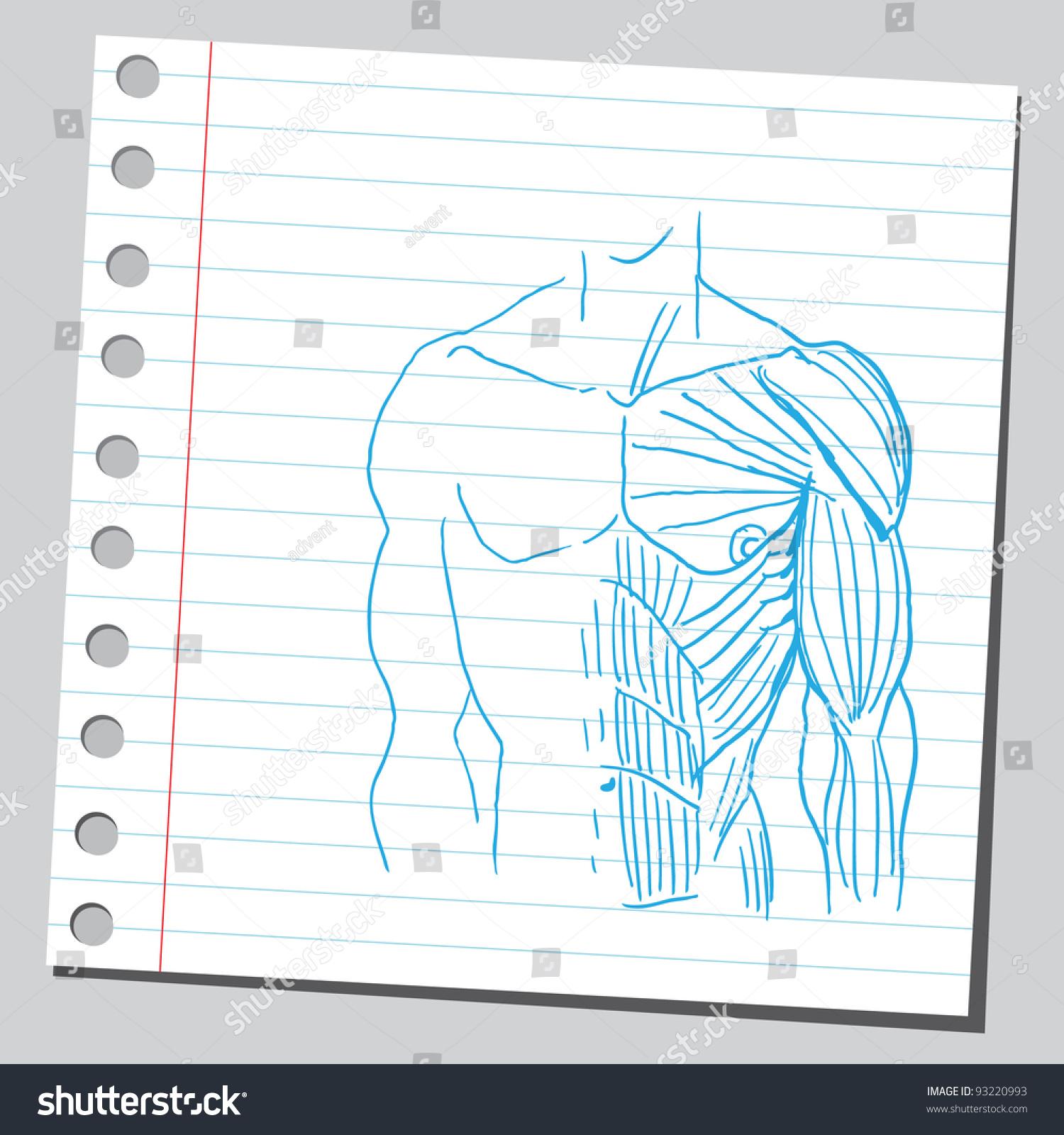 Human Torso Muscles Anatomy Stock Vector 93220993 Shutterstock