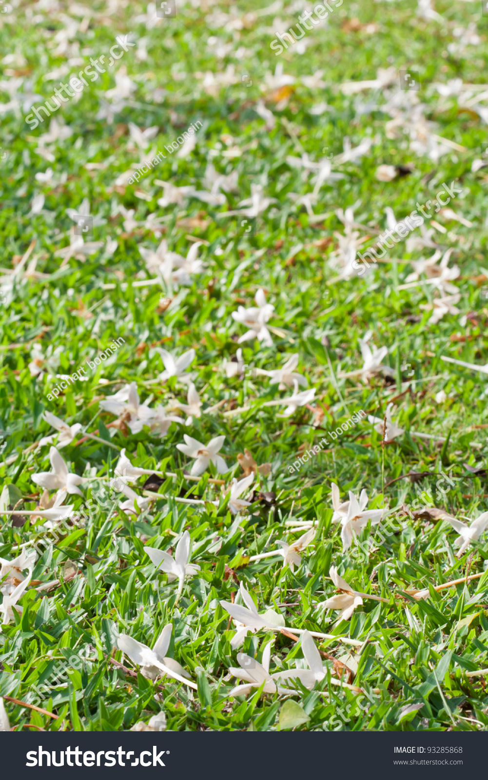White Flowers On Green Grass Stock Photo Edit Now 93285868