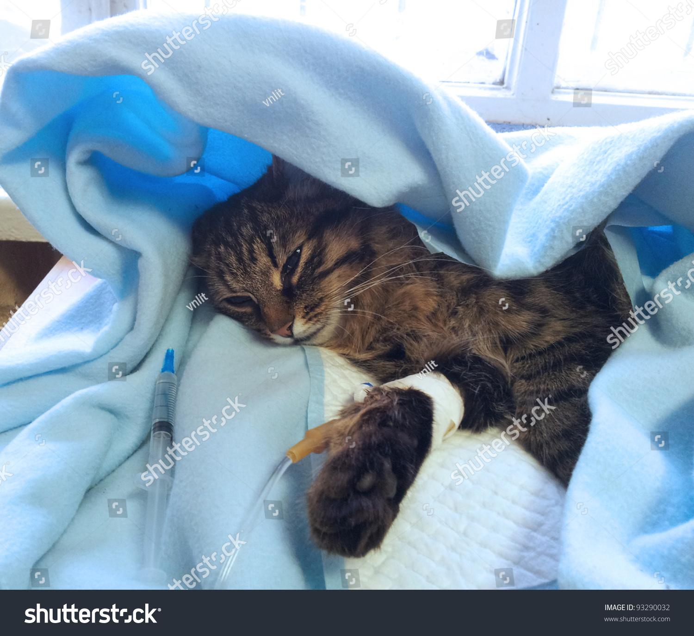 Getting Sick Cat Drip After Stock Shutterstock