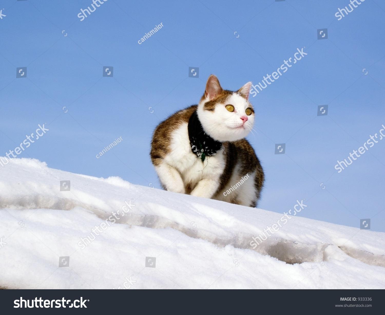 Sick Cat With Bandage On Snow - Winter Scene With Cat ...  |Winter Scenes With Cats