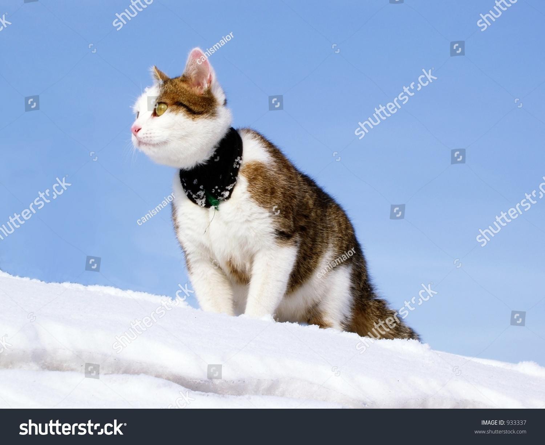 Lynx Cat In Snowy Winter Scene, Norway Stock Photo - Image ...  |Winter Scenes With Cats