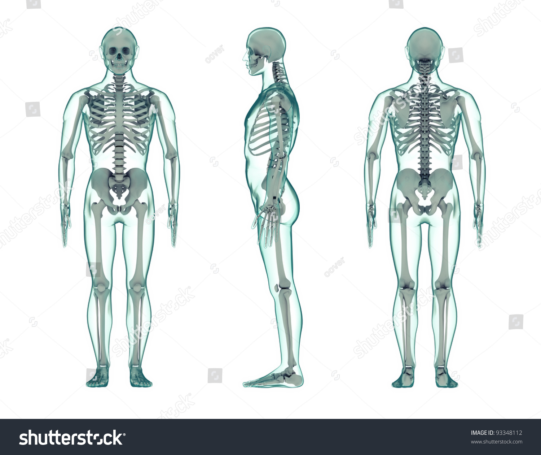 Three View Render Human Body Transparent Stockillustration 93348112