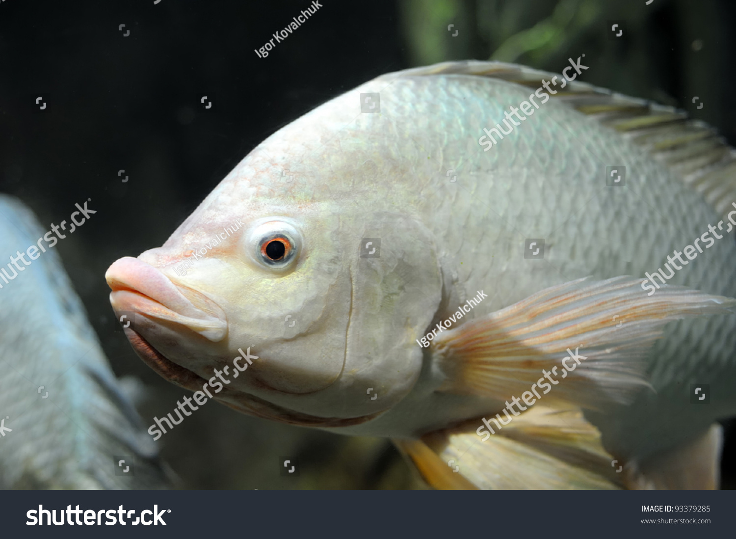 Fish in the deep water stock photo 93379285 shutterstock for Deep water fish