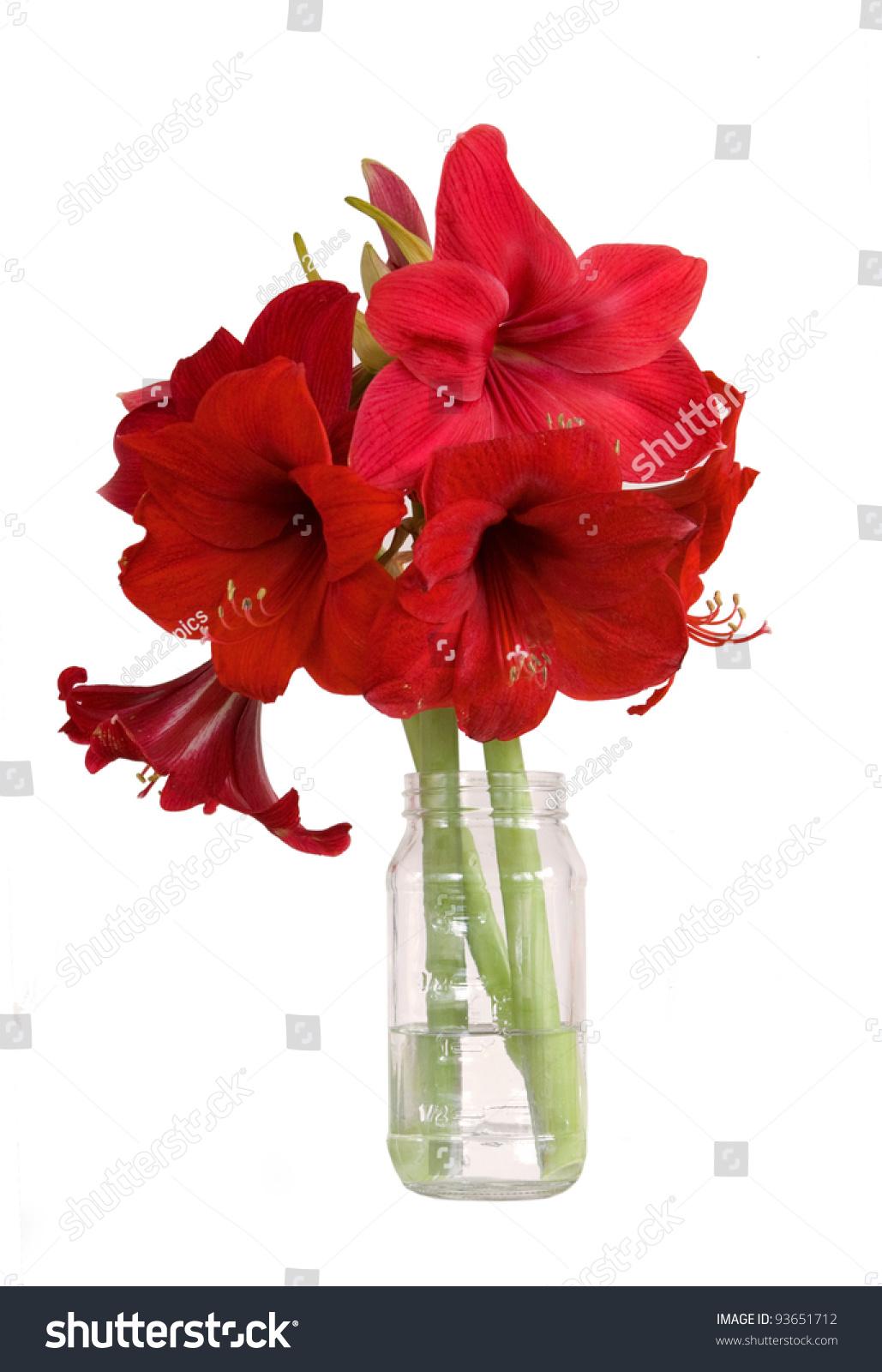 Bouquet amaryllis flowers isolated on white stock photo for Bouquet amaryllis