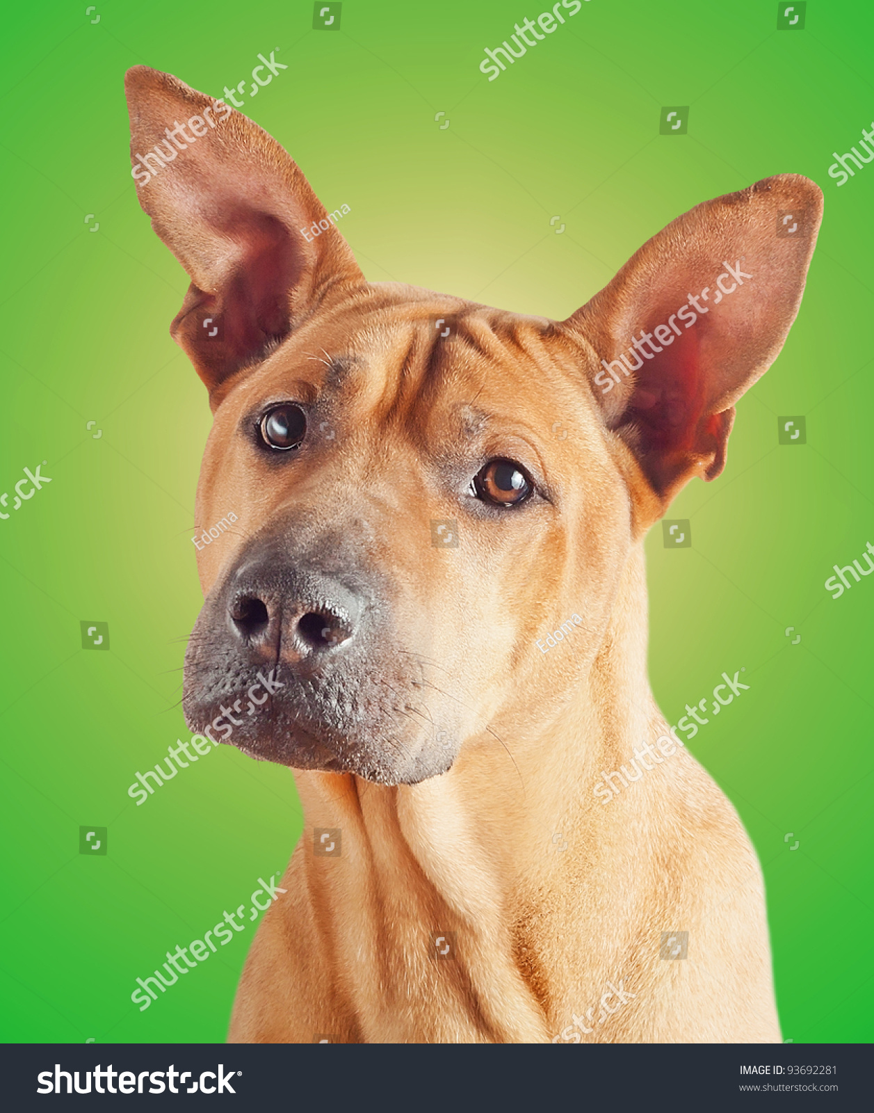 red dog camera shots A 32-year-old thornton man allegedly shot his neighbor in the back of the head after yelling at him for swatting his dog after bruno was on a red leash tied.