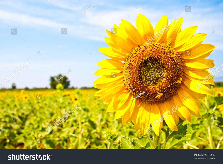 gratis dansk porr sunflower thai