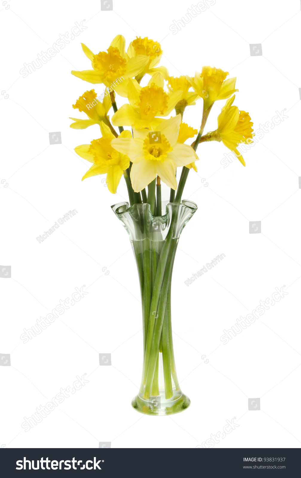 arrangement daffodil flowers fluted glass vase stock photo