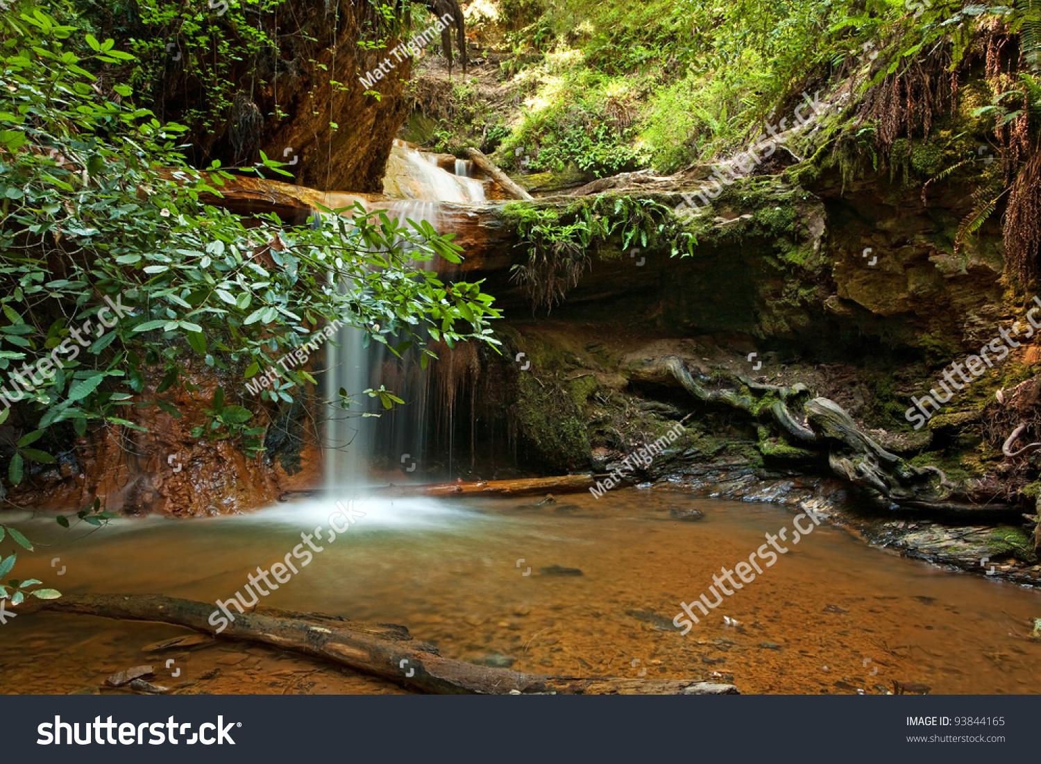 berry creek big and beautiful singles Berry falls is the premier hike of big basin redwoods state park in  prophecy about why big basin redwoods and berry creek  most beautiful sections of the.