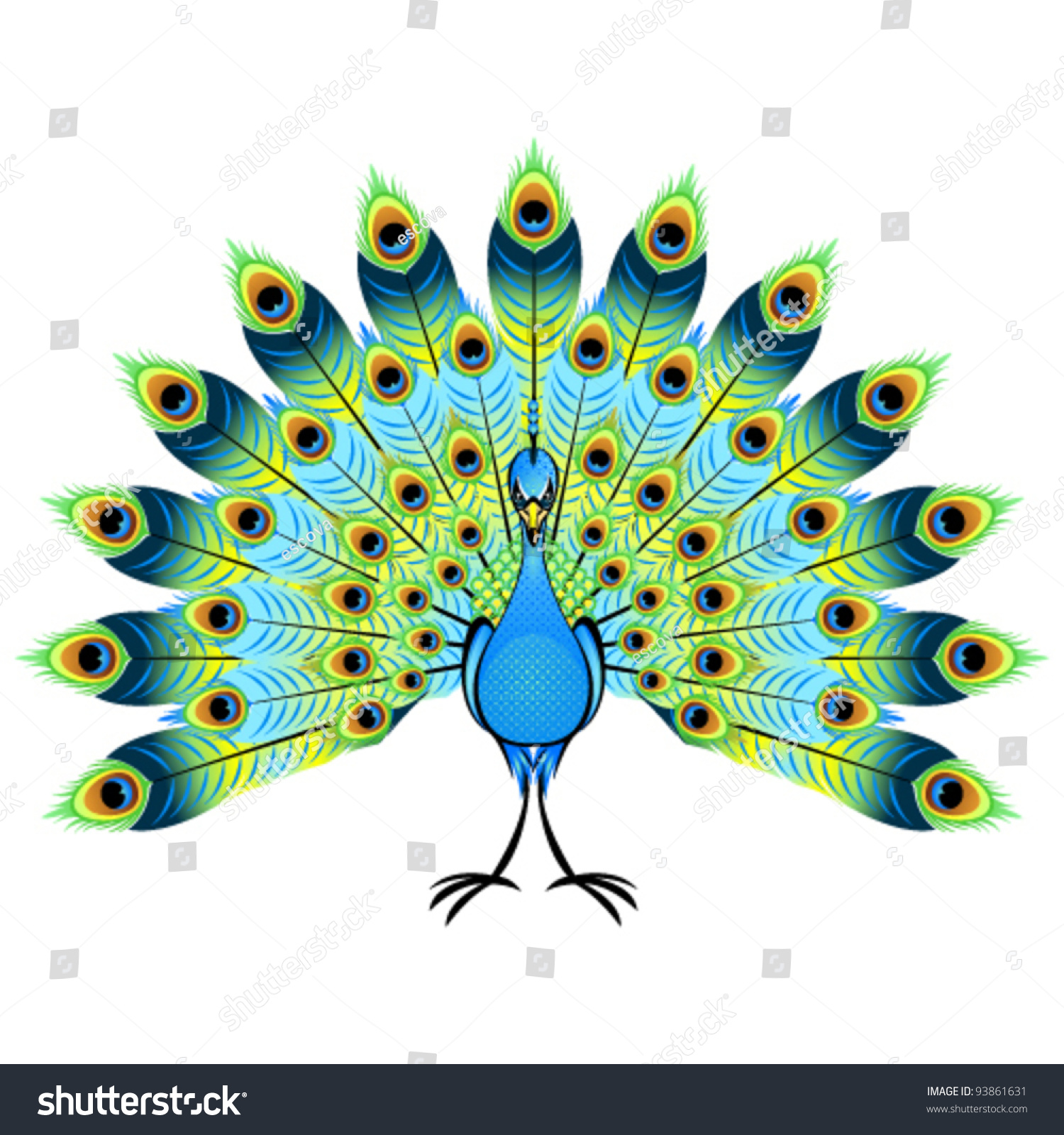 beautiful peacock vector illustration stock vector 93861631 rh shutterstock com peacock vector png peacock vector png