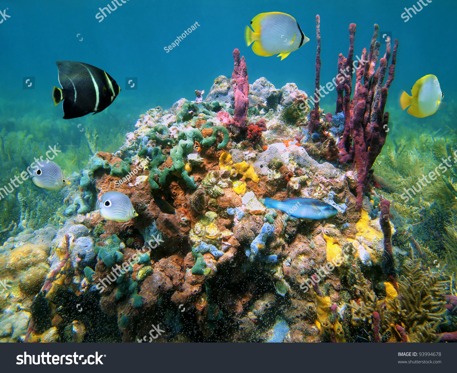 Colorful Sea Life Underwater With Sponge And Coral Stock ... |Colorful Underwater Life