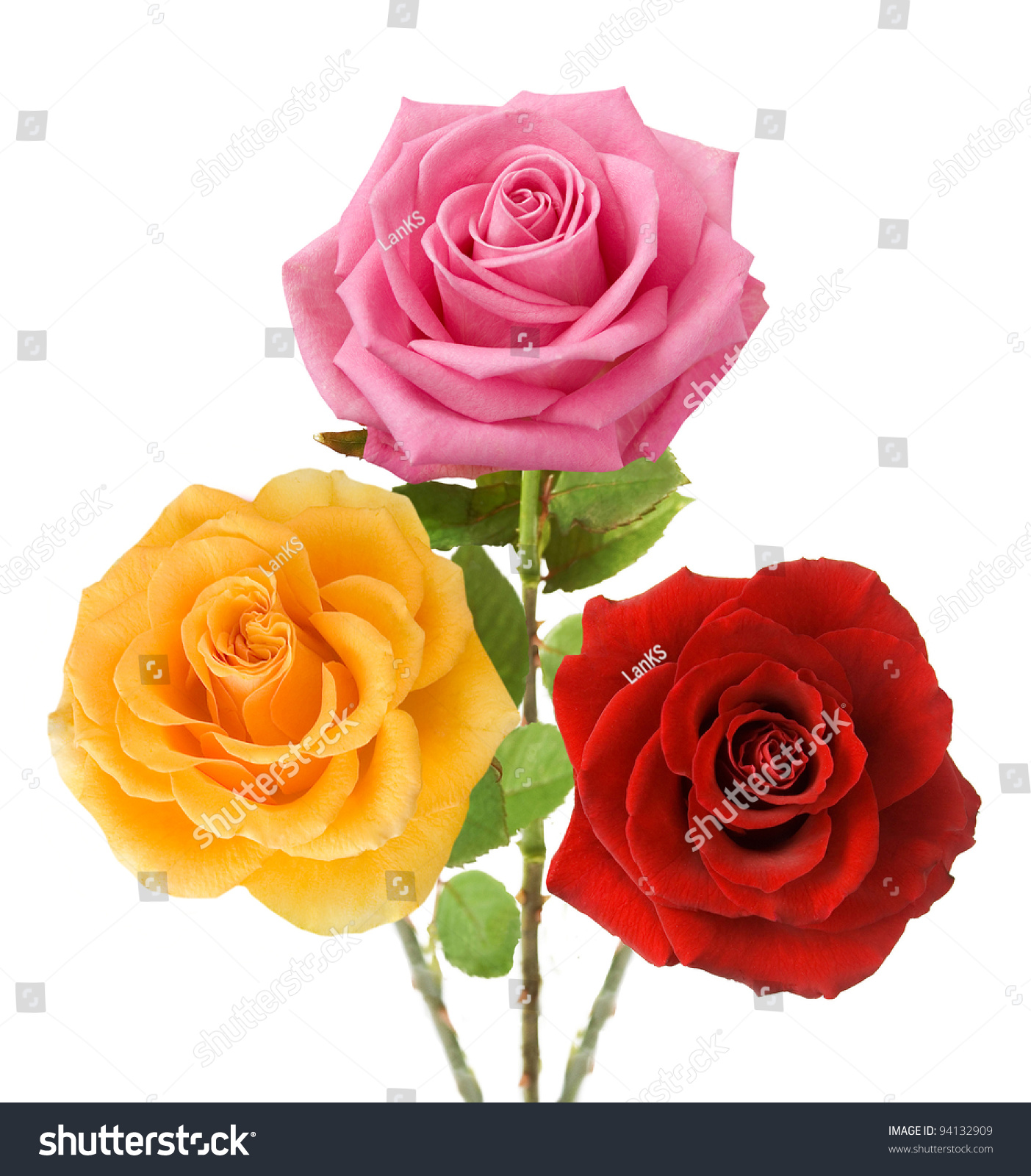 Royalty Free Bunch Of Red Yellow And Pink Roses 94132909 Stock