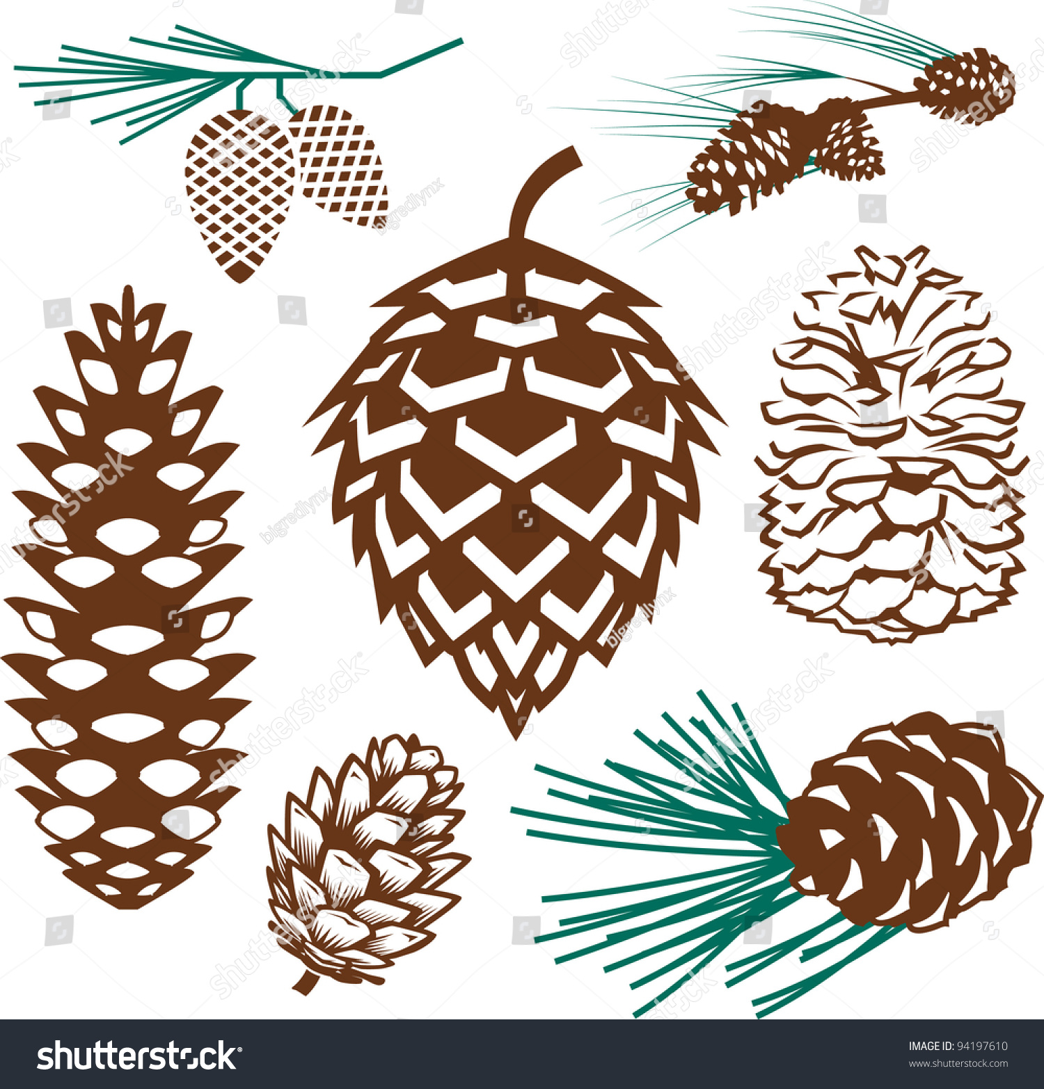 pinecone collection stock vector 94197610 shutterstock