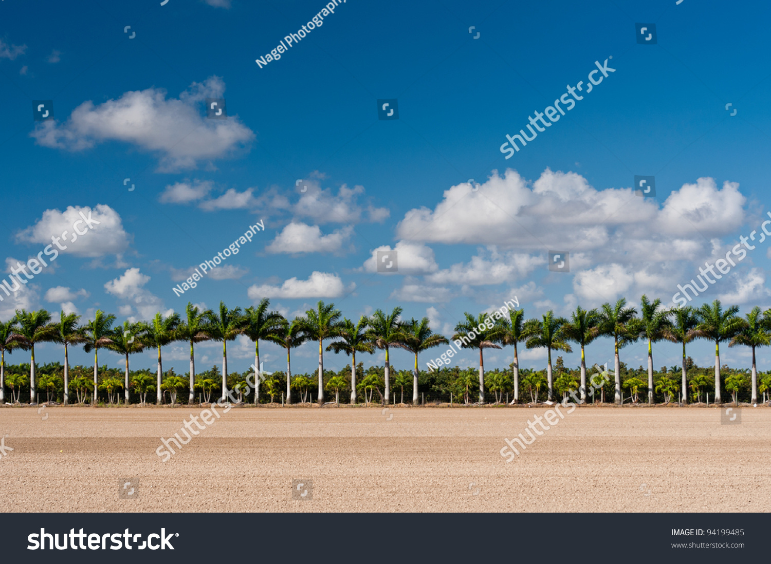 Palm Trees In The Agricultural And Rural Development Zones