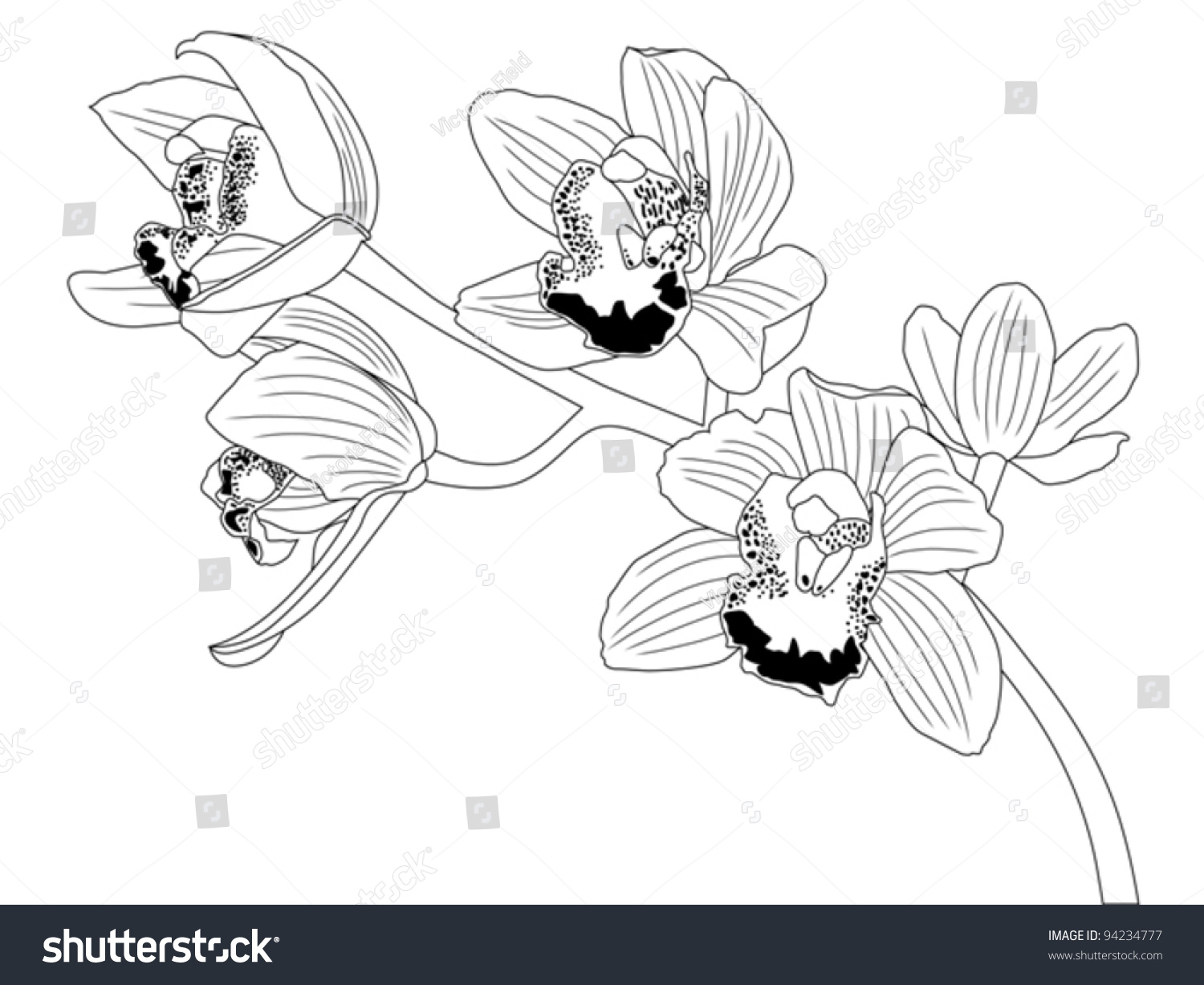Orchid Flower Line Drawing : Orchid line drawing stock vector illustration