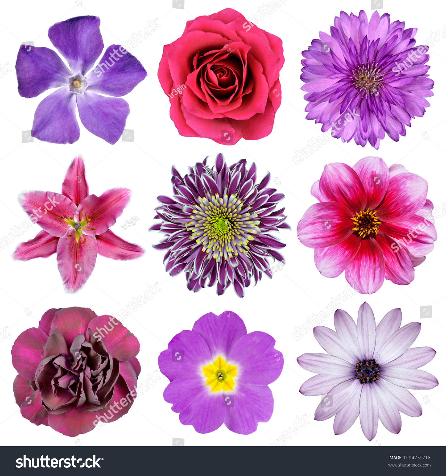 White Purple And Pink Flowers Wiring Diagrams