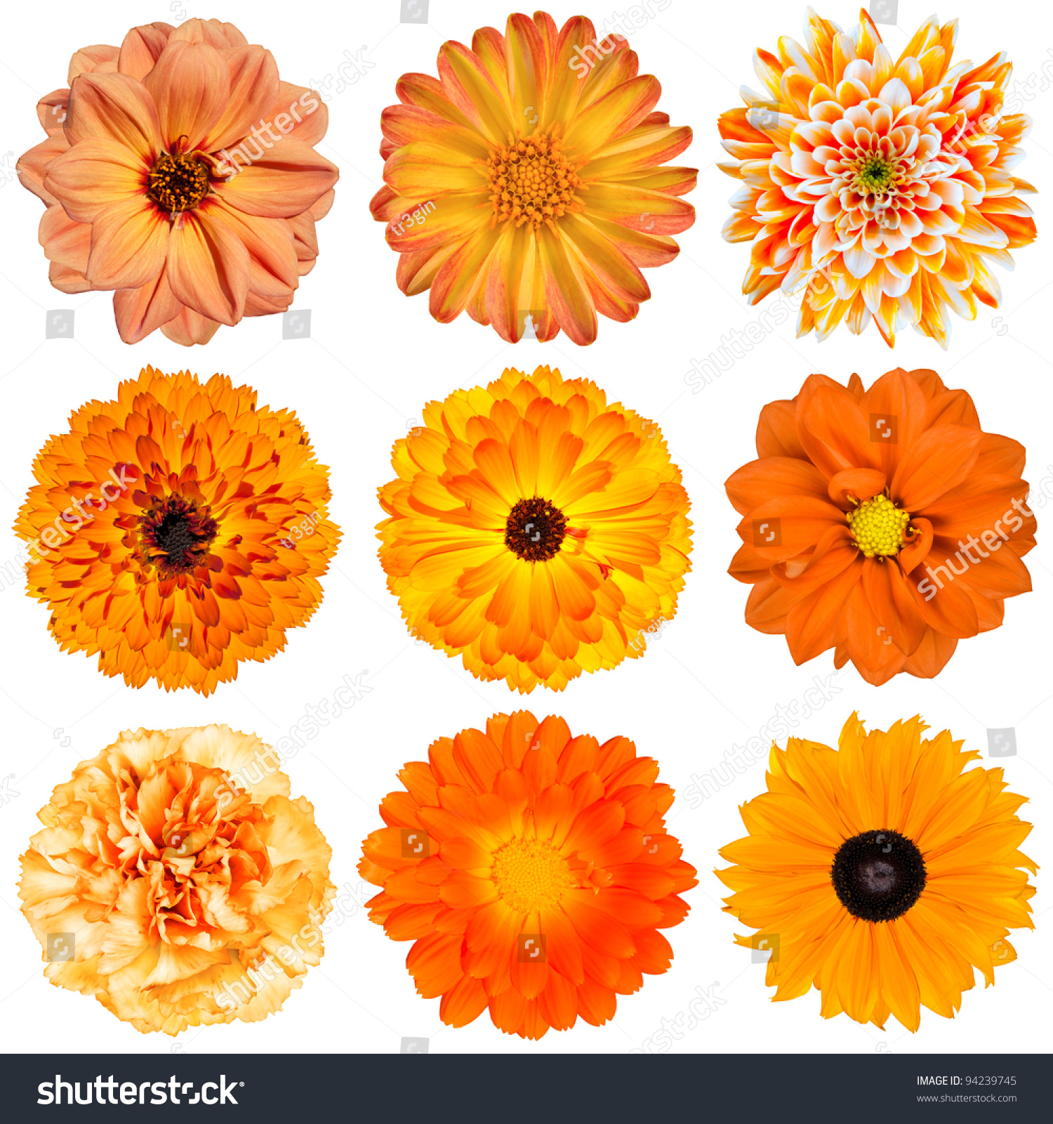 Selection Various Orange Flowers Isolated On Stock Photo