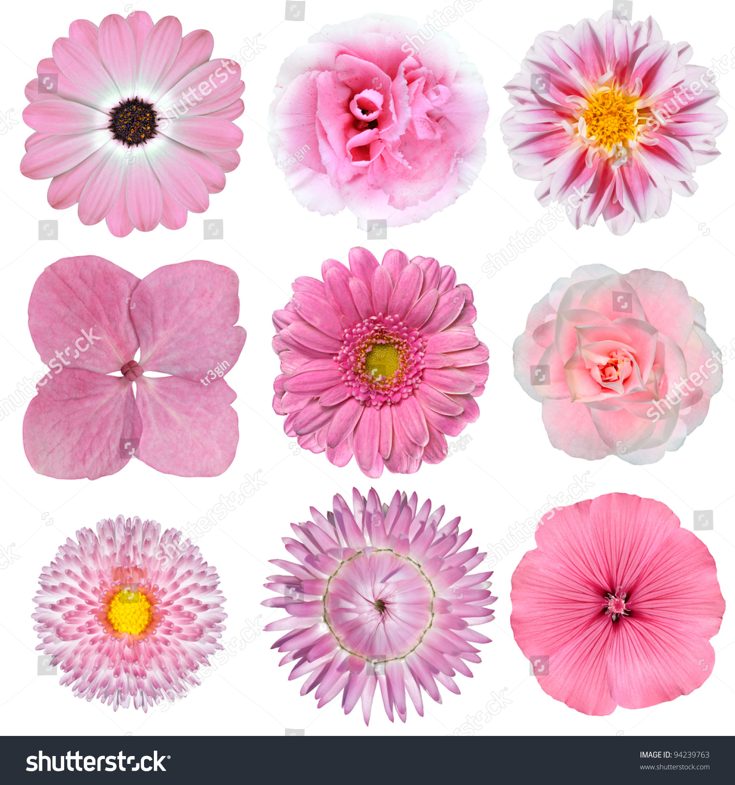 Royalty free collection of pink white flowers 94239763 stock photo collection of pink white flowers isolated on white background selection of daisy carnation mightylinksfo