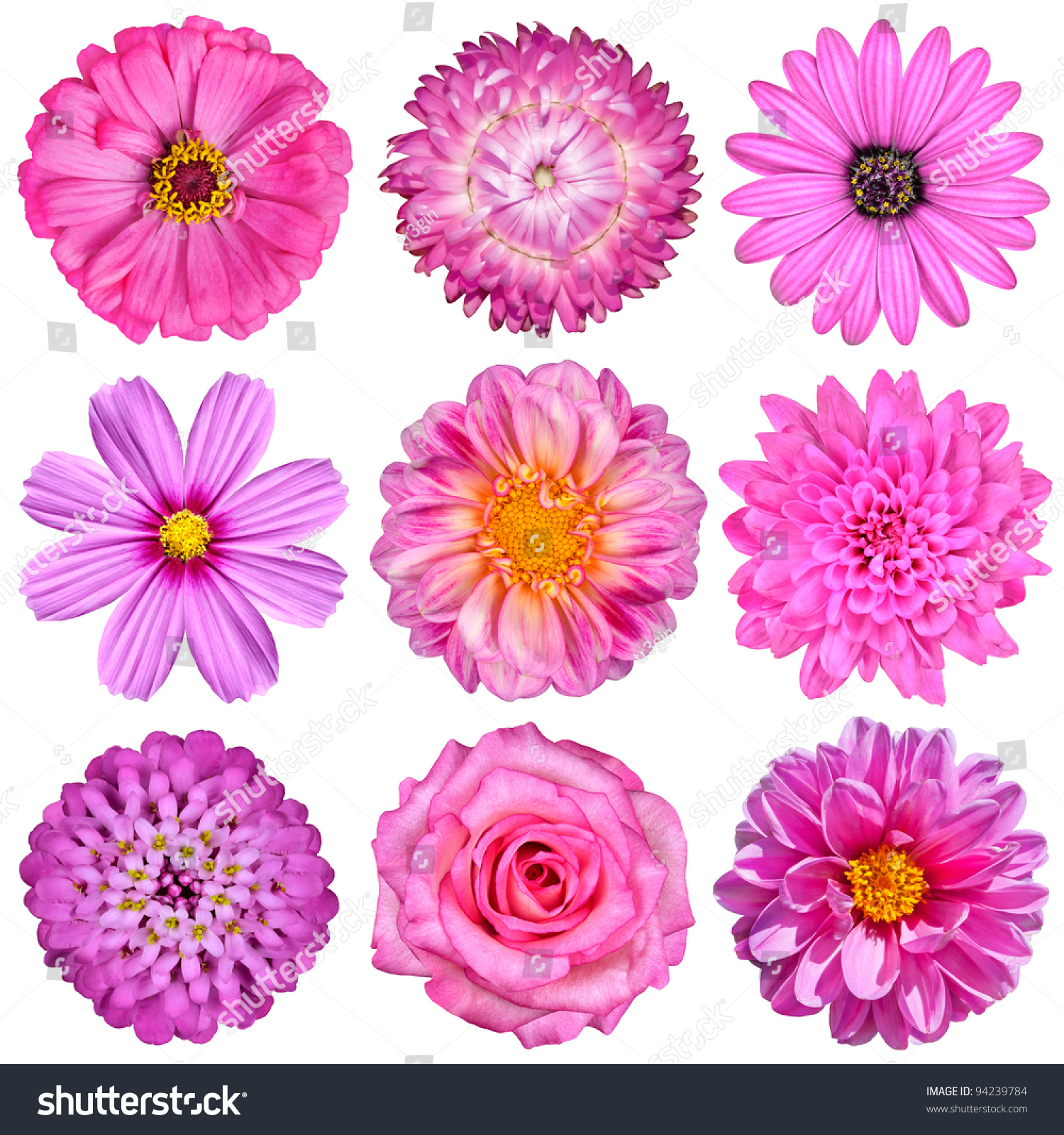 Royalty free selection of pink white flowers 94239784 stock photo selection of pink white flowers isolated on white nine flowers daisy strawflower mightylinksfo