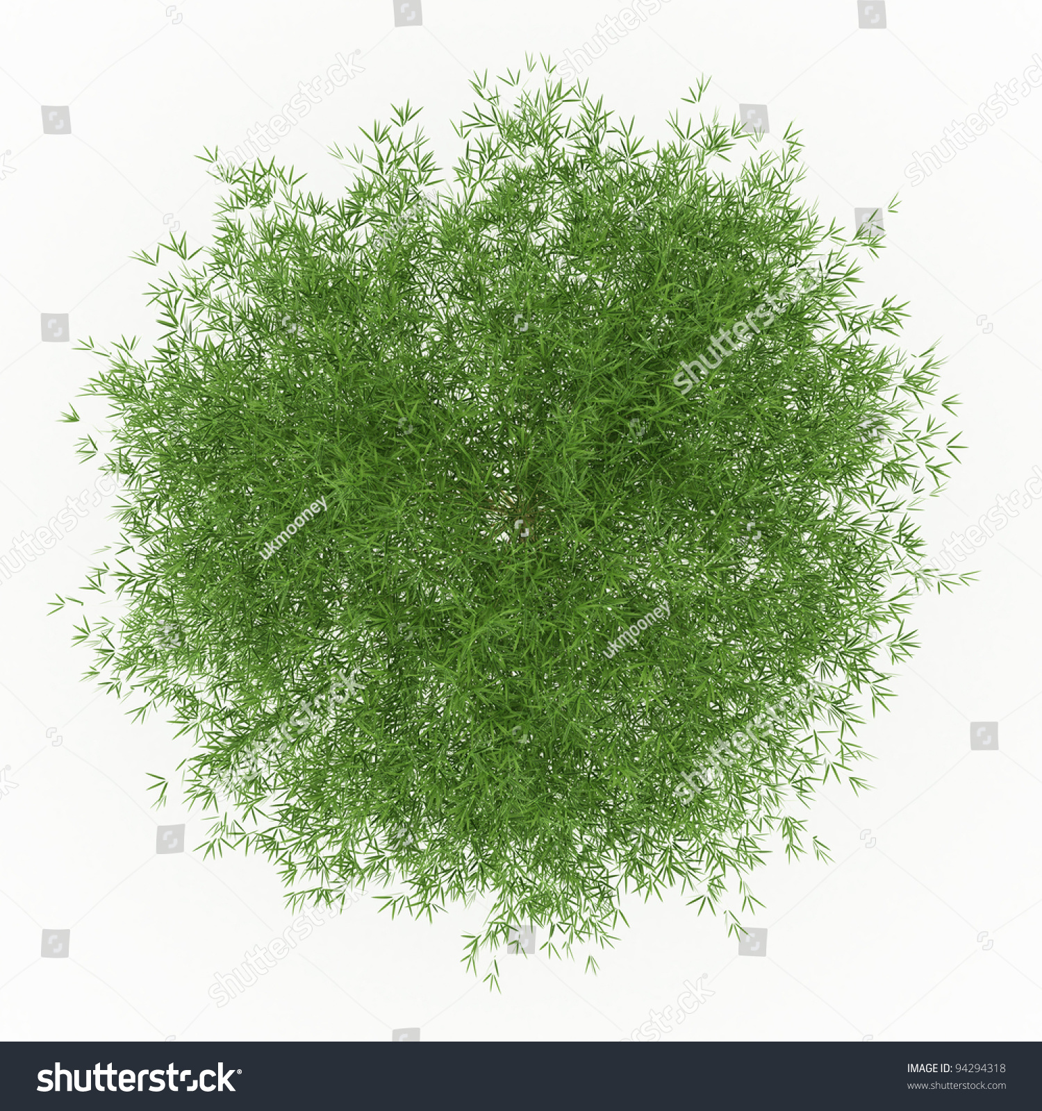 Top View Of Bamboo With Green Leaves Isolated On White