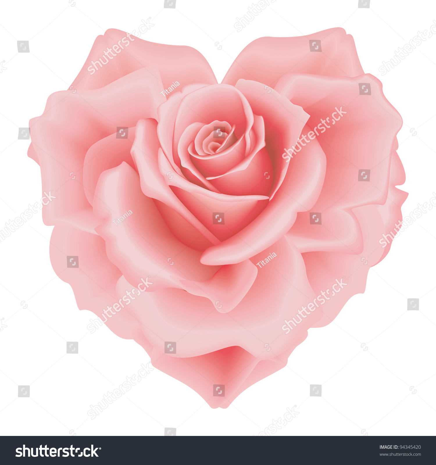 Isolated Beautiful Pink Roseheart On White Stock Vector ...