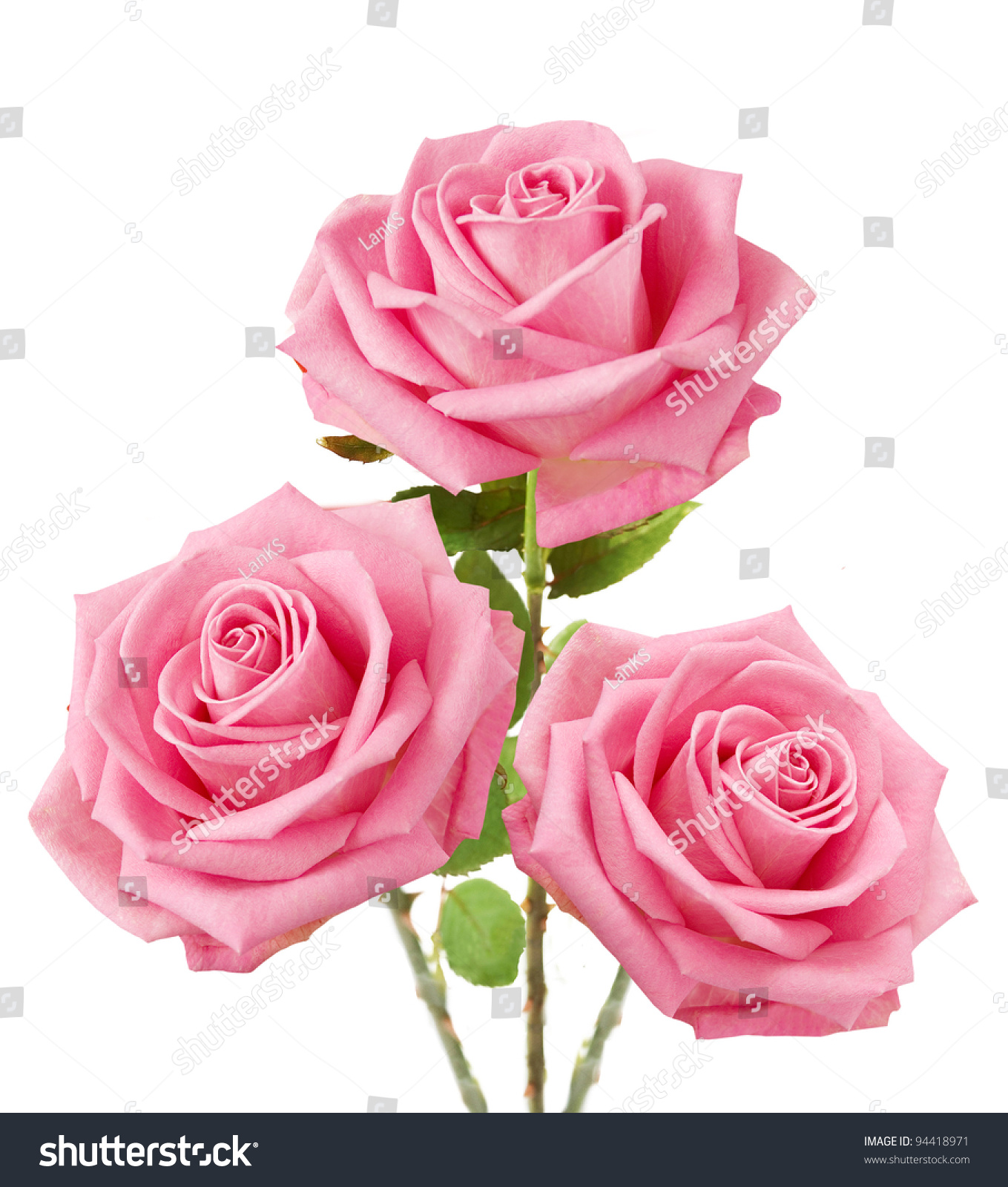 Bunch pink roses isolated on white stock photo edit now 94418971 bunch of pink roses isolated on white mightylinksfo