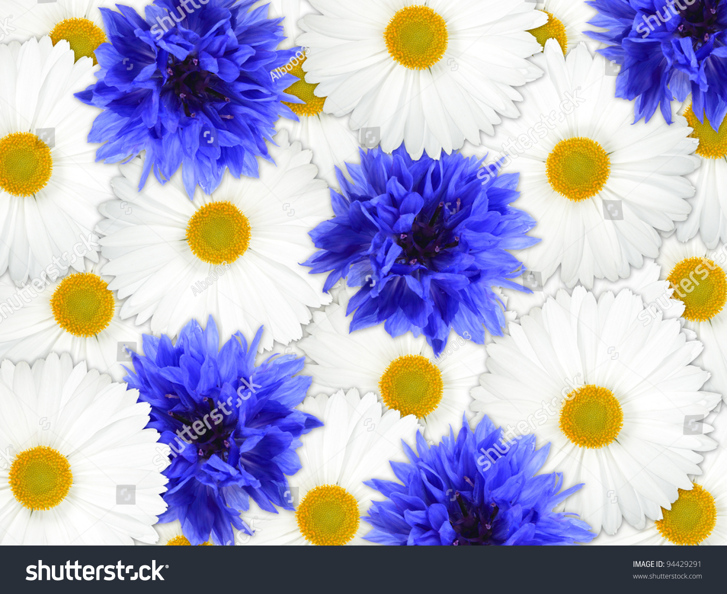 background of blue and white flowers for your design. closeup, Natural flower