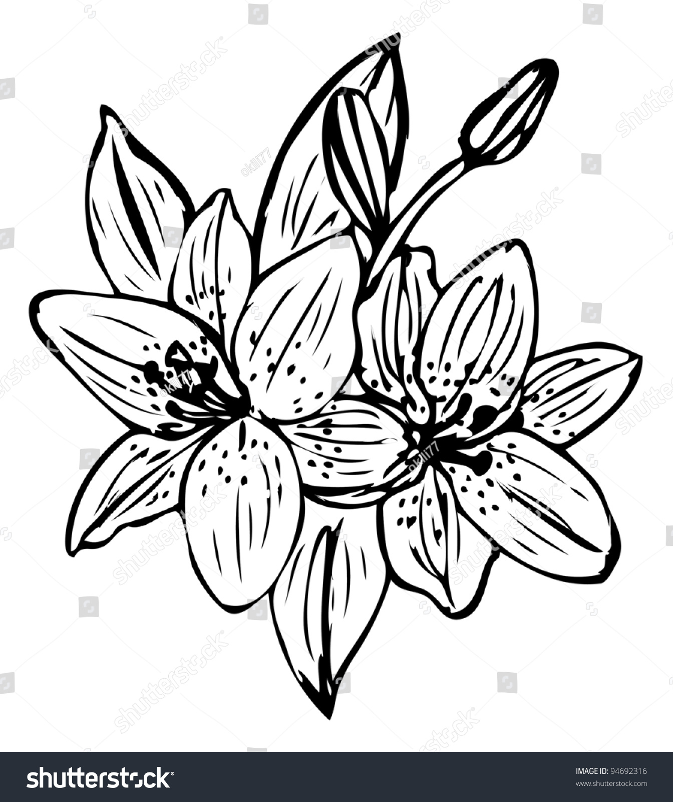Royalty Free Lily Flower Outline Vector Isolated On 94692316 Stock