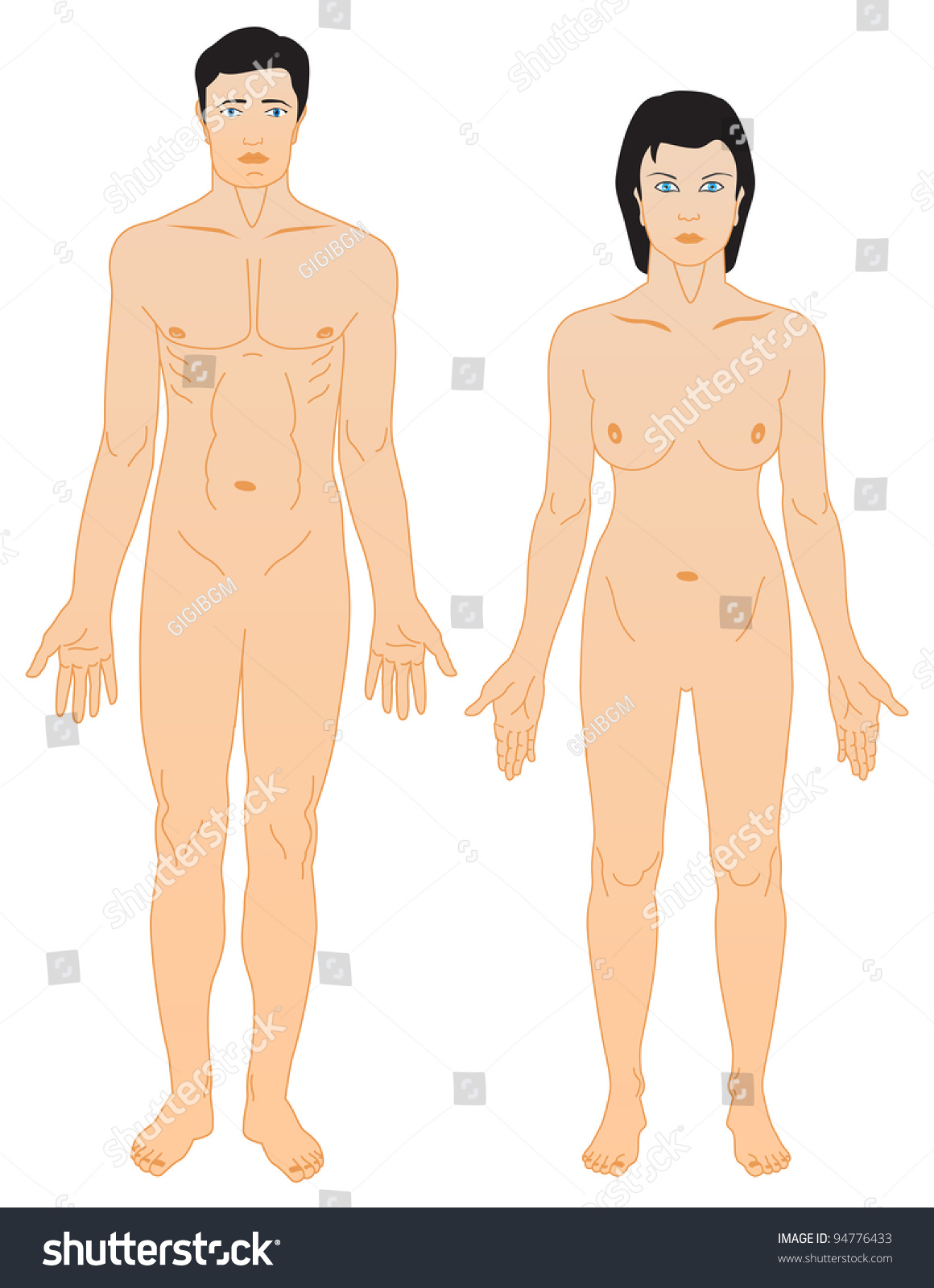 Man Woman Anatomy Stock Vector (Royalty Free) 94776433 - Shutterstock
