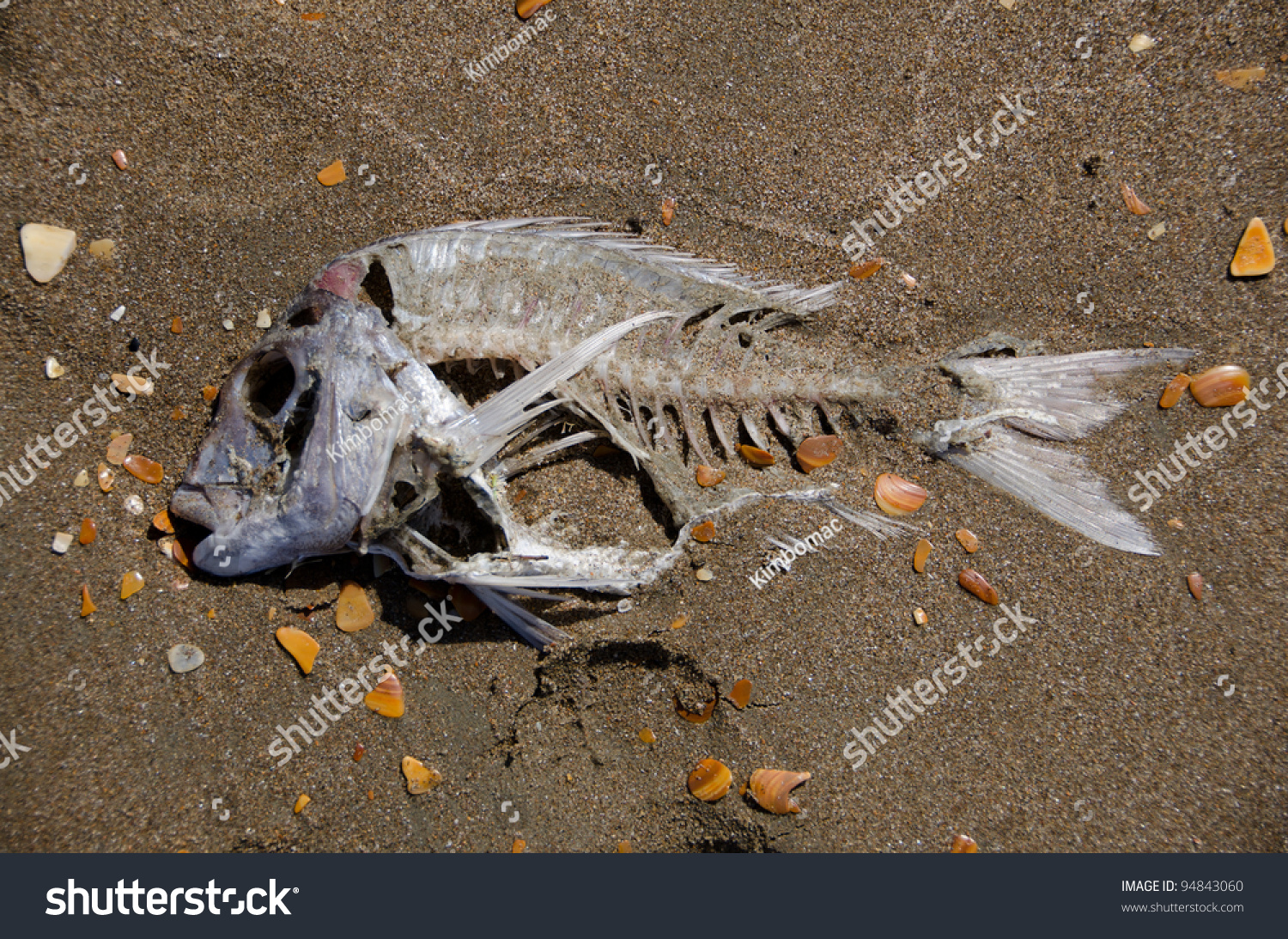 Skeleton of a dead fish on smooth wet beach sand stock for Is a fish wet