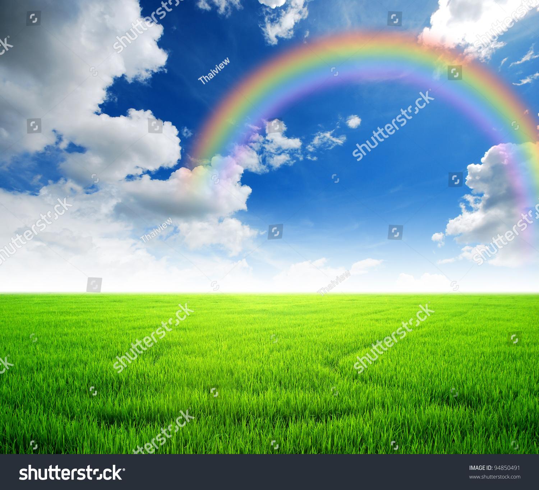 rice field green grass blue sky stock photo (royalty free) 94850491